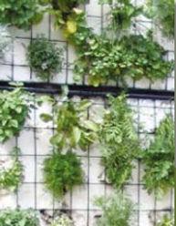 Avaflakes-hydroponic-growing-medium-herb