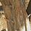 Thumbnail: Juniper Wood