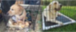 deluxe crate mat composite.jpg