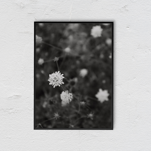 B&W Flowers Poster - ByJessica