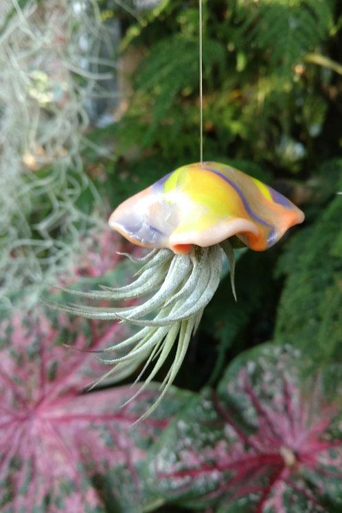 Striking 'Jellyfish' Air Plant holder