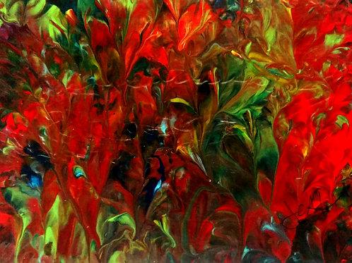 'Wild Gladiolus'