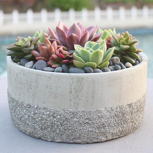 Live Succulent Arrangement in Stylish Ceramic Bowl