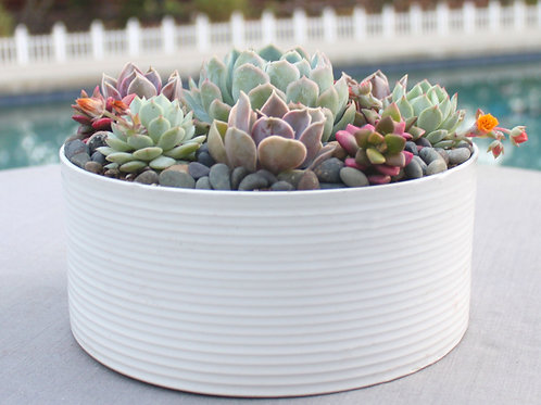 Live Succulent Arrangement in Modern Ceramic Bowl