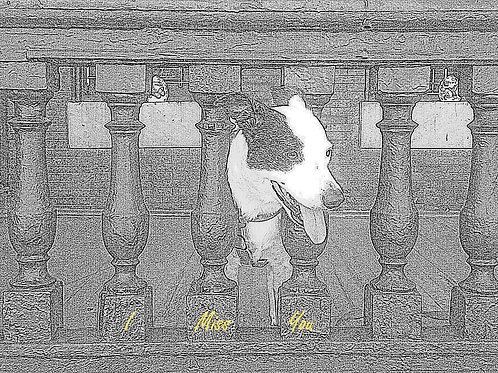 Dog on Porch: Note Cards