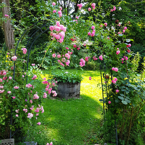 Rosenbogentitel.jpg