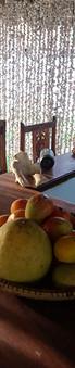 Restaurantzanzibar 686.jpg