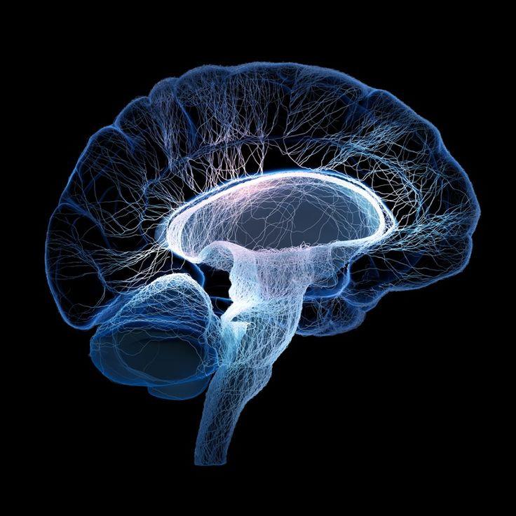 BrainSync