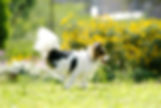 dog0027-018.jpg