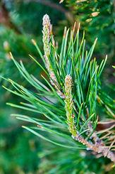 Cedar branch.jpg