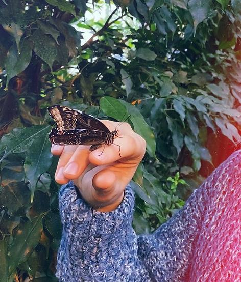 Casa delle farfalle Vienna