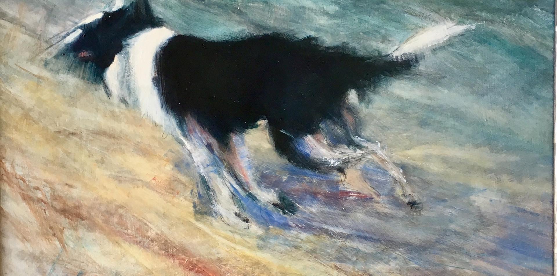Dog running dunes