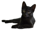 cat-907749_1280_clipped_rev_1.png
