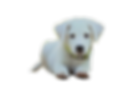 puppy-1903313_1280_clipped_rev_1.png