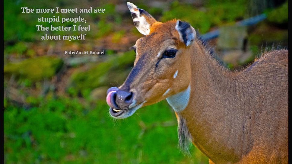 The more I meet and see people...