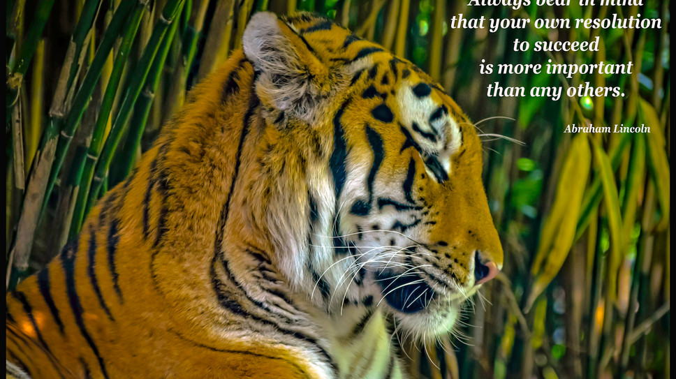 Always bear in mind...