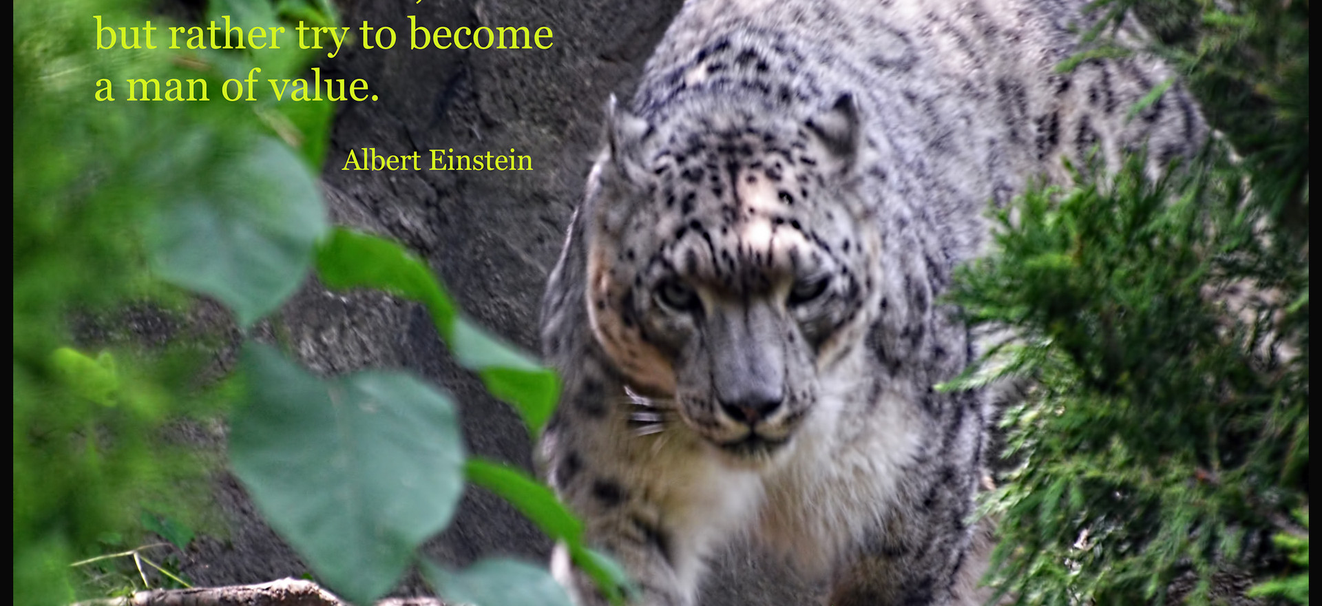 try not to become...