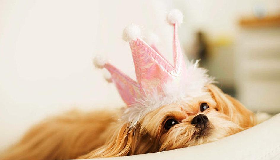 dog grooming folsom, grooming folsom, cat grooming, pet grooming, folsom, orangevale, granite bay, roseville, grooming,