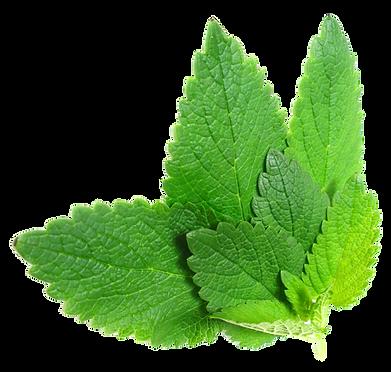 Download-Herbs-PNG-File-For-Designing-Pr