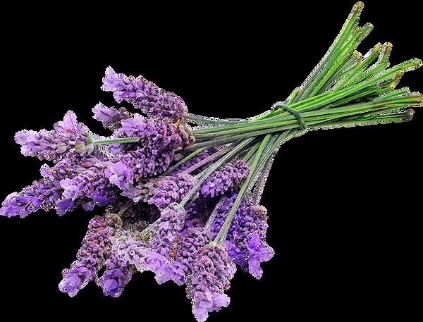 kisspng-english-lavender-lavender-oil-lo