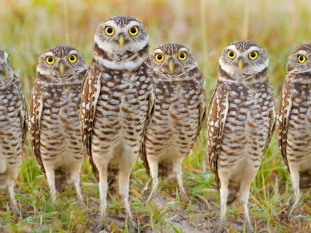 Zeg niet zomaar een groep vogels!