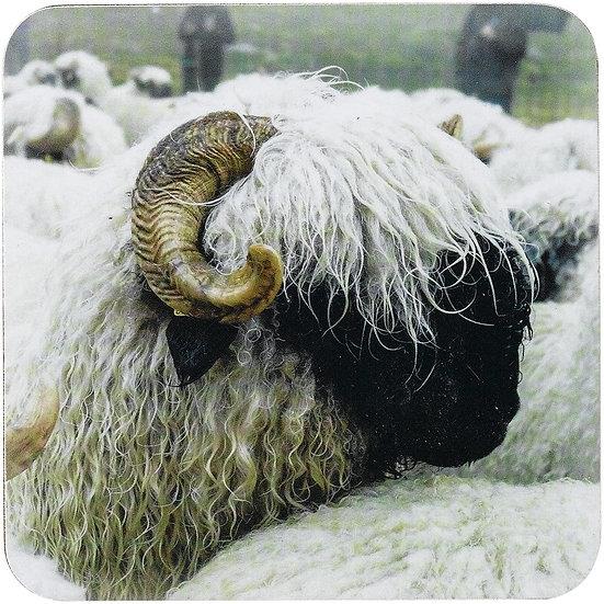 Valais Blacknose Farm Sheep Set Of 4 Coasters