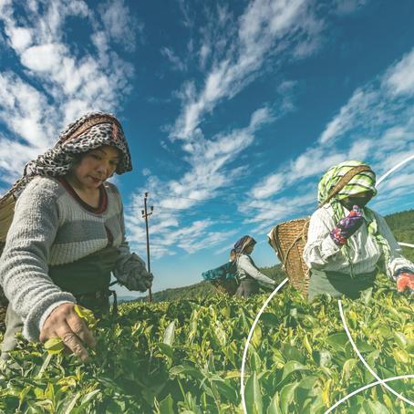 Smallholder AgriTech S.E.A. Landscape 2020