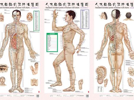 Les méridiens: repérer des points d'acupuncture pour soulager