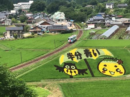 田んぼアートが色鮮やかに!!