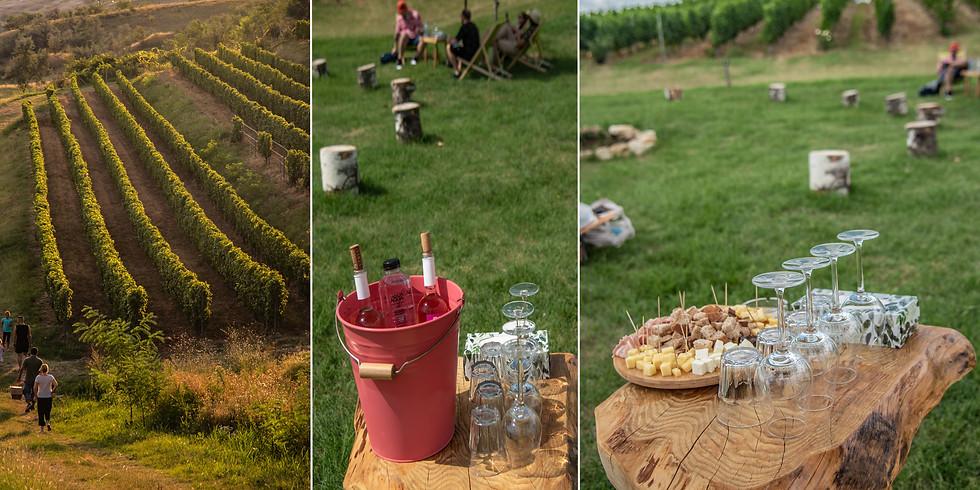 Picnic in vie - Crama Velvet Winery