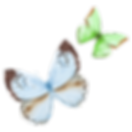 Watercolor%20Butterfly%2016_edited.png