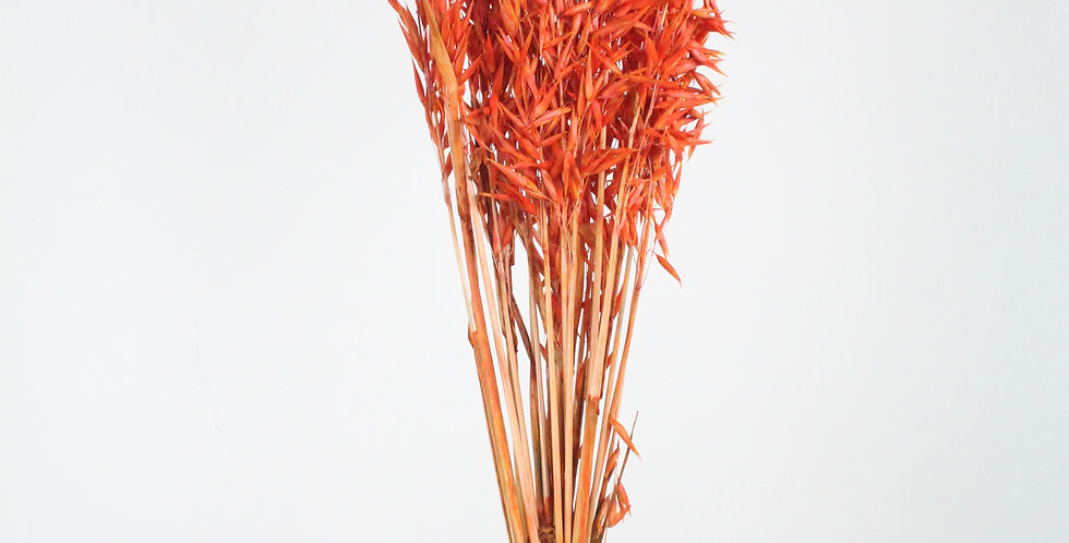 Avoine orange