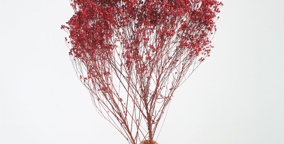Broom bloom rouge
