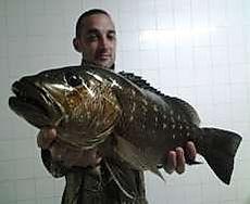 gros poisson le diabar