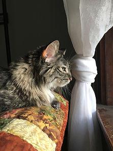Princess Cat / Lisa Brown Animal Communicator