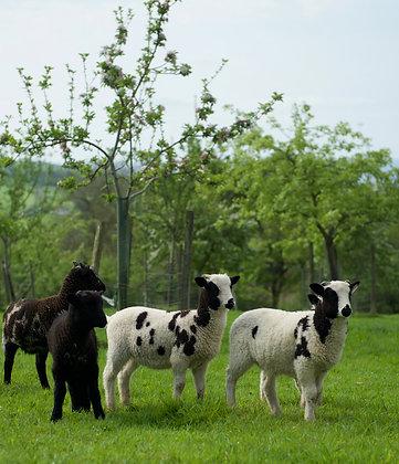 Pasture-fed Lamb Cuts