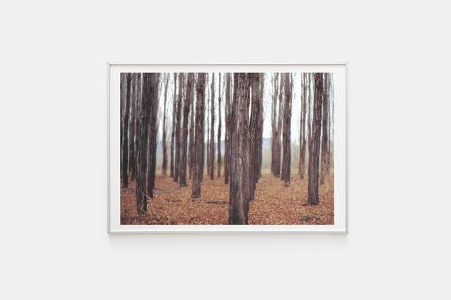 Bosque I Serie analógica