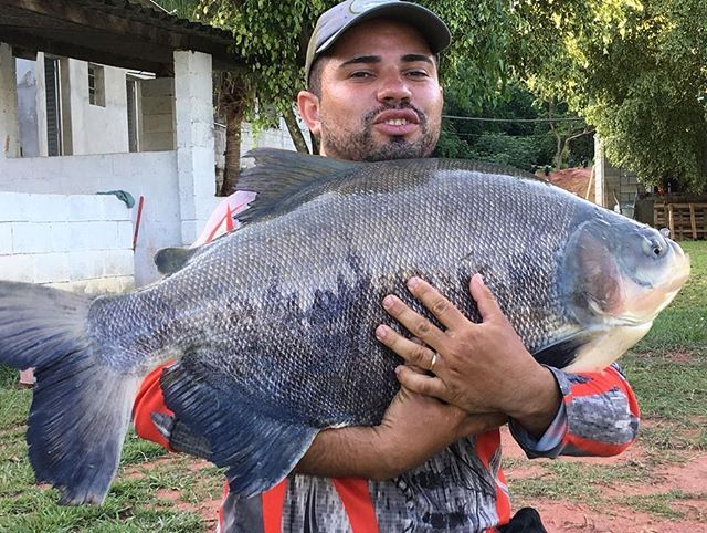 Pescador_ Marcelo_Isca_ Ração na pinga �