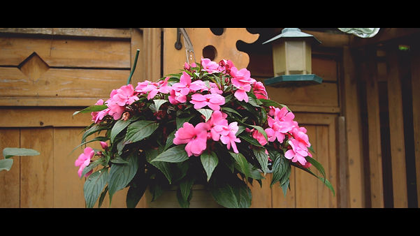 A video taken from the beautful pink flowers displayed at the bride's house.