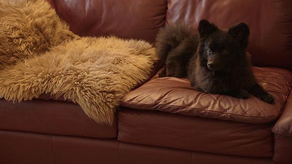 Dorota's dog.
