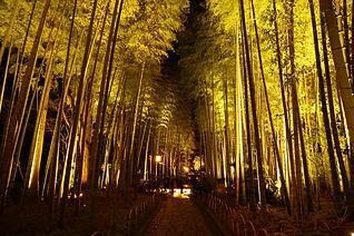 竹林の小径ライトアップ.jpg
