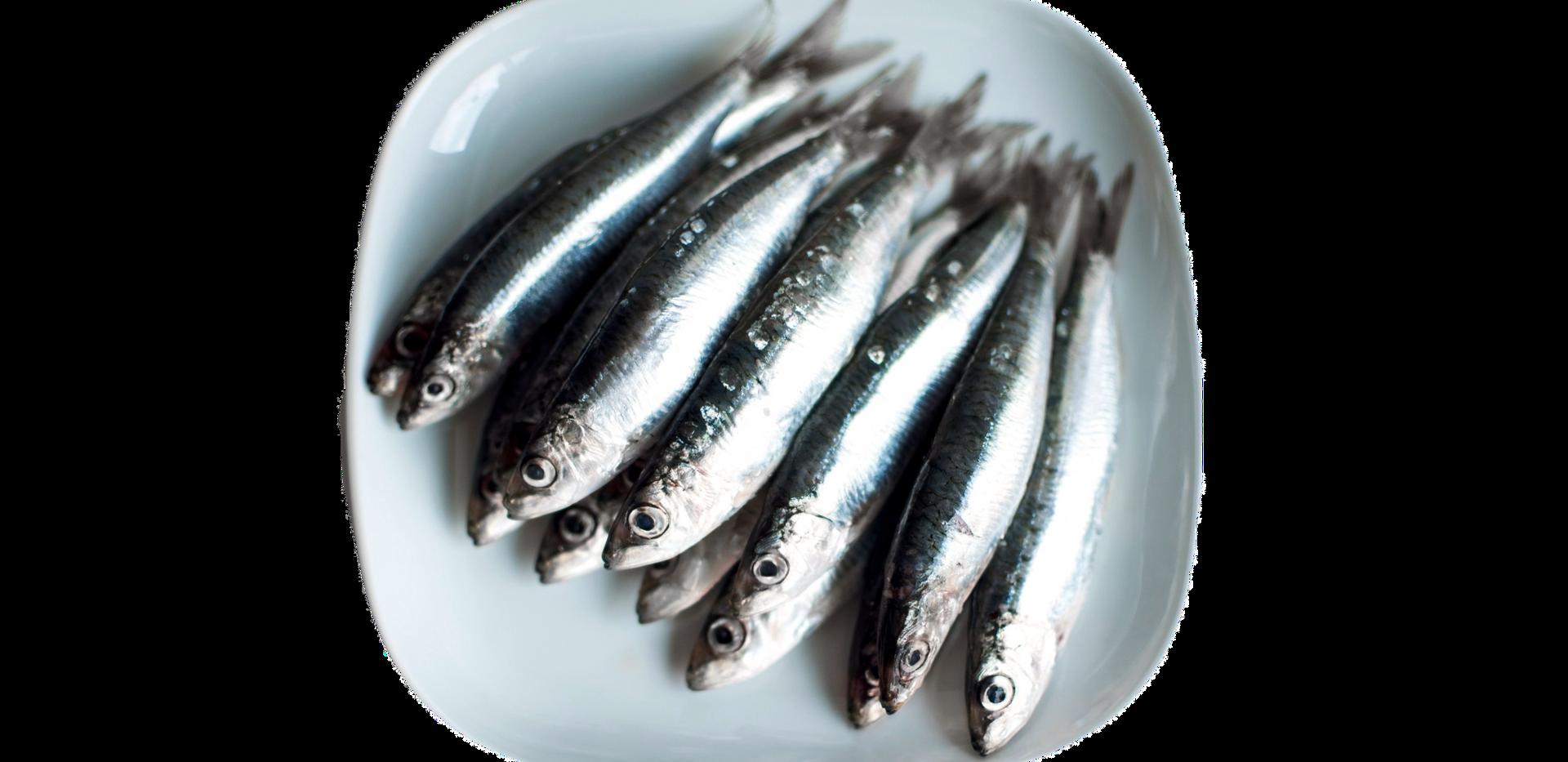 Toppers | Pre-frozen Sardines