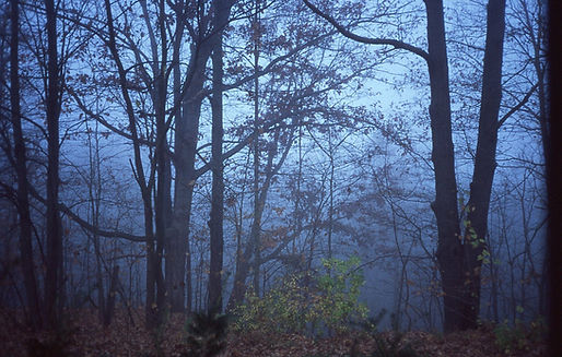 Indiana Dawn Woods