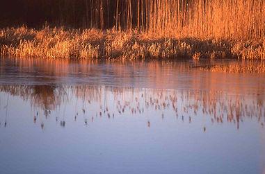 Fall Cape pond
