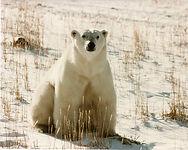 Sunny Beach Bear