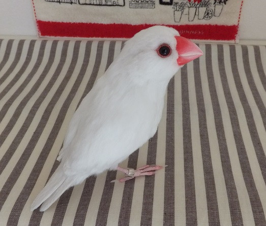 文鳥3.JPG