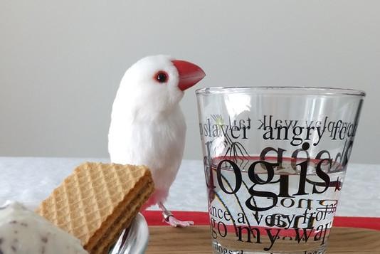 文鳥6.JPG