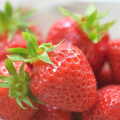 Lot de 10 plants de fraisiers
