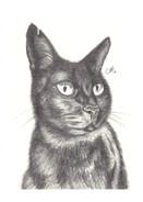 gato2-01.jpg
