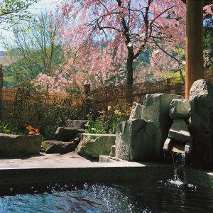 ペンション朝ねぼう自慢の貸切温泉露天風呂|春